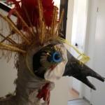 Nieuwsbrief Kroontje, de Kraanvogel foto (10)